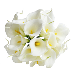 lilly-png